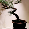 Choosing the Right Bonsai Pot for Your Tree